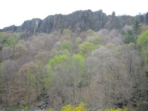 Looking up at the Palisades