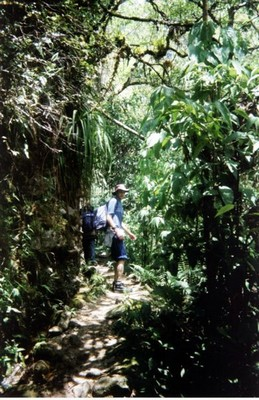 Some of the sheltered corners of the mountain have a very tropical climate